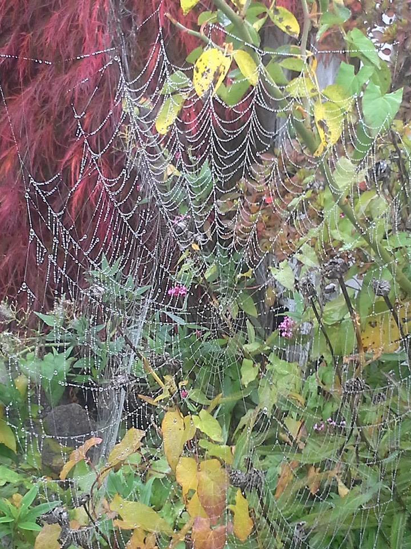 10.23.13 - Nothing takes weight of October fog more serious than spider webs.
