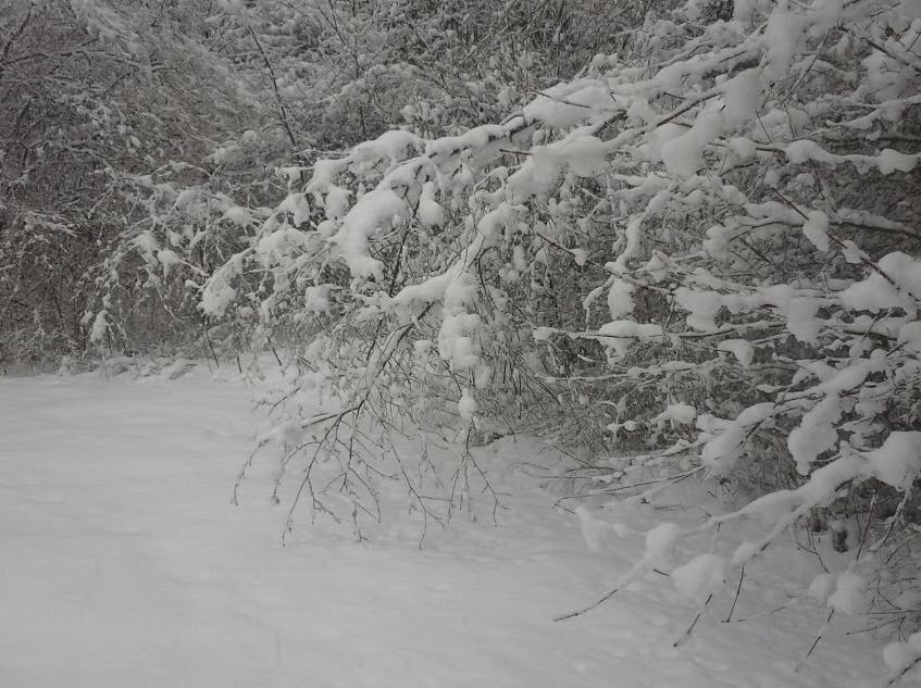 Skagit Snow Feb 2014