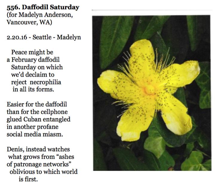 556. Daffodil Saturday